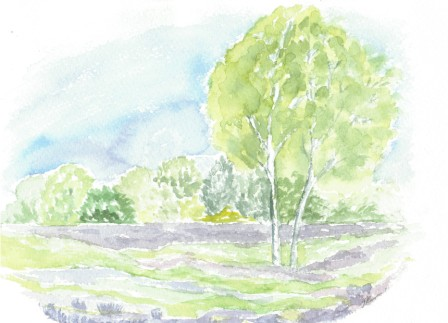 Løvtræ, buske og lyng