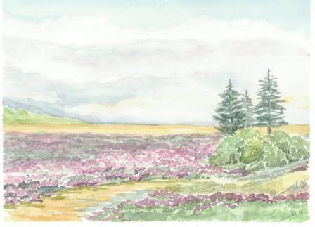 Landskab med lyng og grantræer