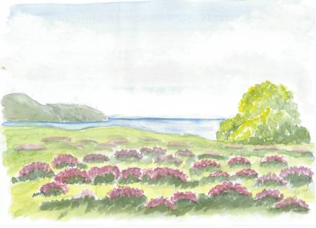 Landskab med lyng