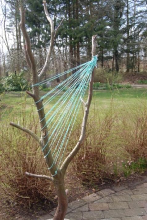 Harper i træ