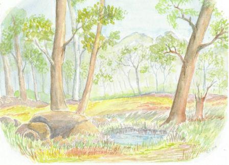 Lille skovsø