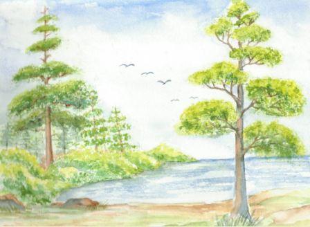 Nåletræer og løvtræ